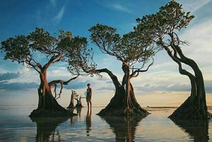 Pulau Kelor Sailing Komodo