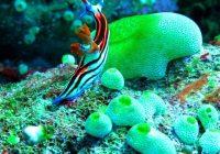 Snorkeling Pulau Komodo Labuan Bajo